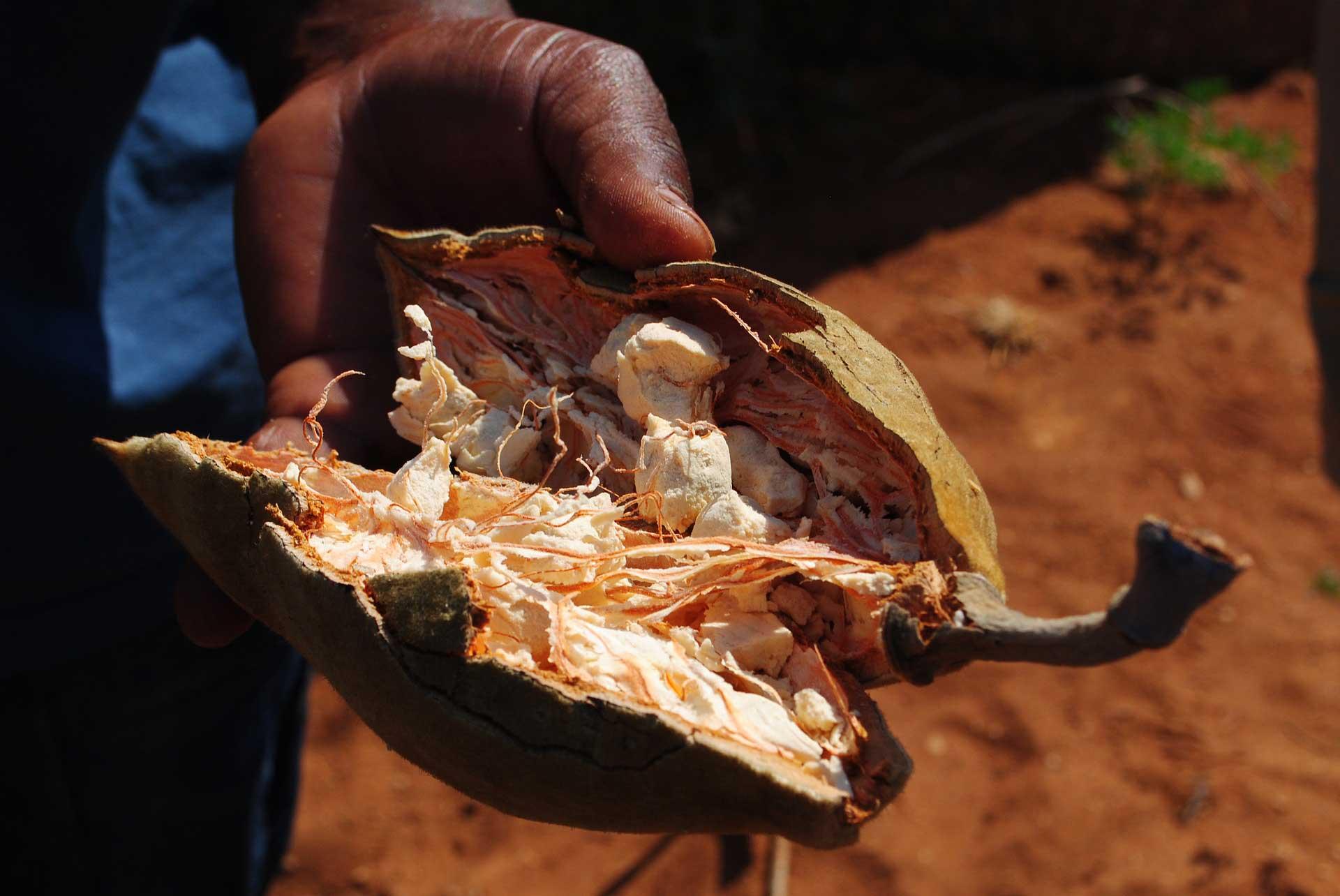Baobab gyümölcs